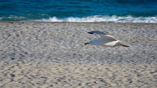 Seagull, Sea, Beach, Sand, Onda, Blue, Costa, Riva