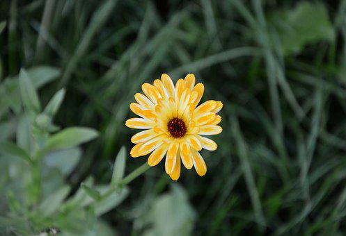 Flower, Flowers, Yellow Daisy, Petals, Massif, Bouquet