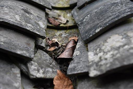 Brick Sheet, Tiles, Defoliation