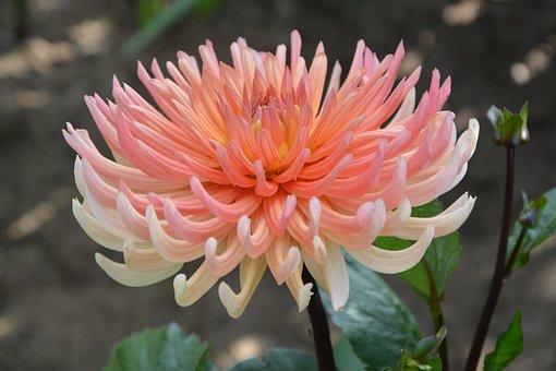 Flower, Flowers, Anemone, Petals, Nature, Bouquet