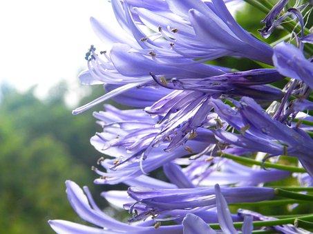 Flowers, Nature, Garden, Summer, Spring, Flora
