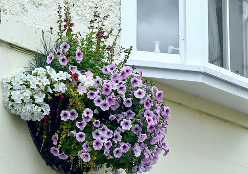 Flowers, Hanging Basket, Window, Floral, Petunias