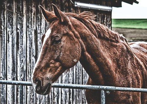 Horse, Brown, Animal, Animal World, Brown Horse, Stall