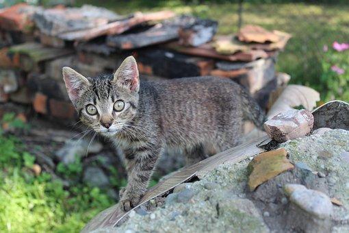Cat, The Background, Great, Nice, Kitten, Animals, Mood