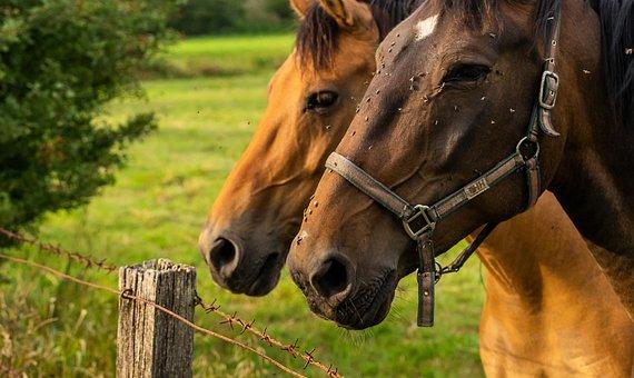 Animal, Horse, Nature, Ride, Landscape, Mare