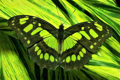 Amnh, Museum, Butterfly, Green, Nature, Wing, Insect