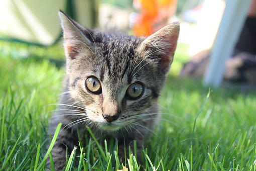 Cat, The Background, Kitten, Nice, Eyes, Fur, Animals