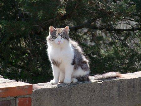 Cat, On The Wall, Animal, Kitten, Portrait, Sweet