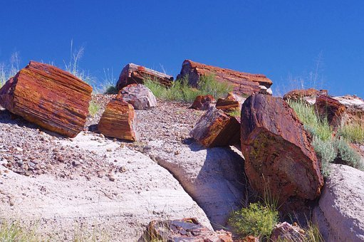 Petrified Forest National Park, Colorful, Petrified