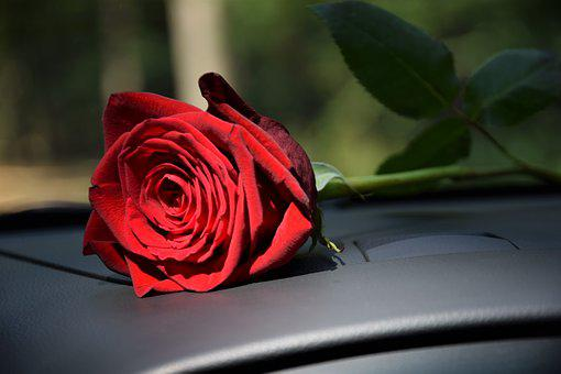 Red Rose On Car Dashboard, Sun Ray, Love, Romantic