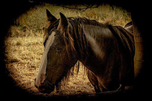 Horses, Animals, Stables