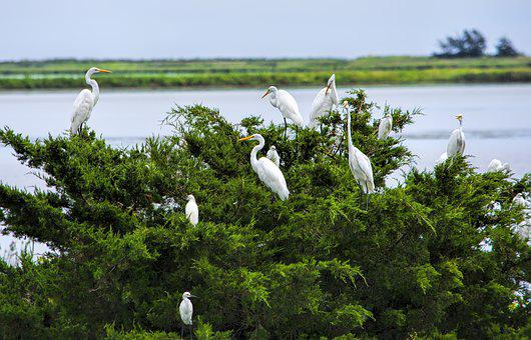 Water, Bay, Plant, Birds, Heron, Wildlife, Refuge