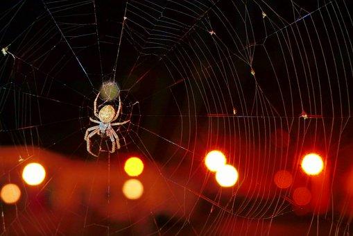Kołosz Slit, Arachnids, Insect, Cobweb, Night, Animals