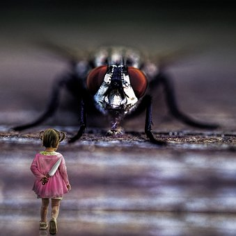 Insect, Fly, Wing, Animal, Horror, Giant Fly, Fear