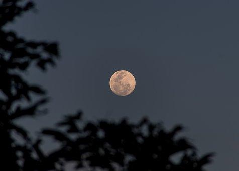 Moon, Full, Sky, Trees, Night, Australia