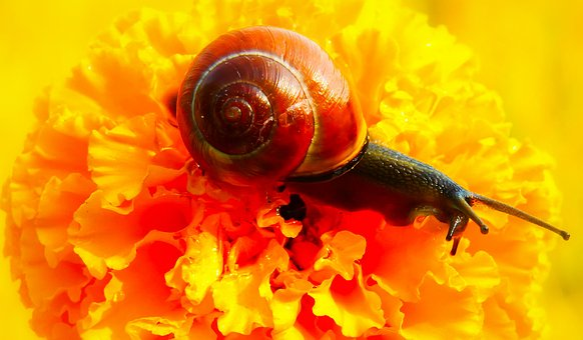 Snail Zaroślowy, Molluscs, Flower, Turkish, Garden