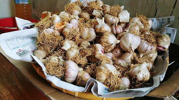 Garlic, Through Garlic, Harvest, Basket, Grain