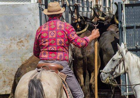 Camargue, Jumper, Gardian, Bulls, Horse