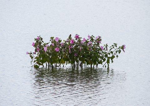 Water, Bay, Plant, Sea, Landscape, Nature