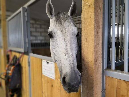 Horse, Stall, Animals