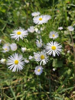 Sous Rosettes, Spontaneous Flora, Sunny Day