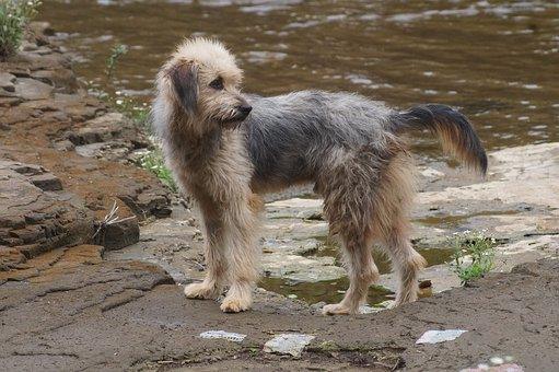 Dog, Water, River, Nature, Animals, Waters, Pets
