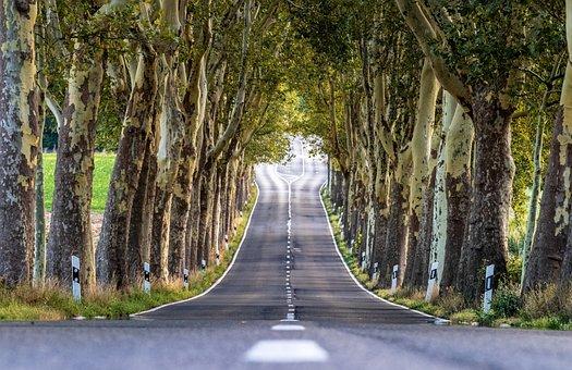 Avenue, Trees, Nature, Landscape, Away