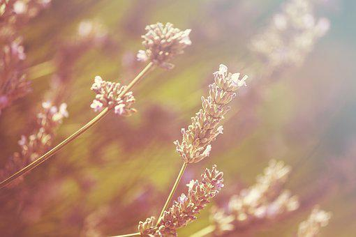 Heat Wave, Lavender, Glow, Hot, Summer, Barbecue
