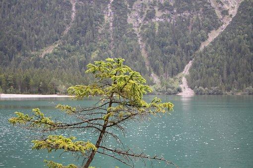 Lake, Branch, Fir Tree, Green, Blue, Mountains, Nature