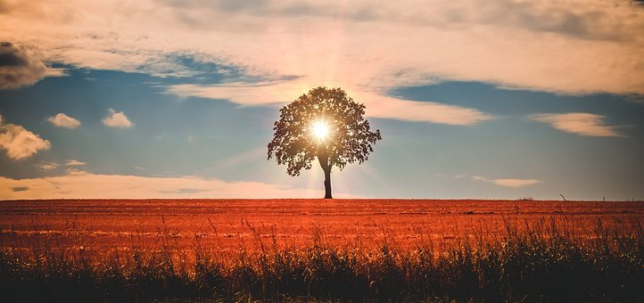 Landscape, Tree, Sun, Light, Nature, Rest, Clouds
