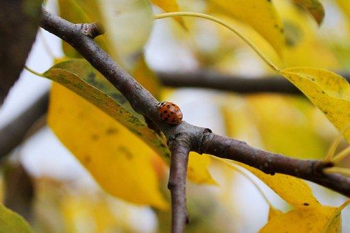 Ladybug, Insect, Ladybird, Beetle, Red, Orange, Leaves