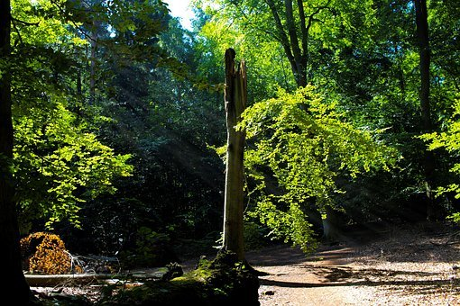 Tree, Nature, Green, Leaves, Summer, Sunbeam, Gorgeous