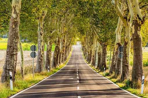 Avenue, Road, Landscape, Trees, Nature
