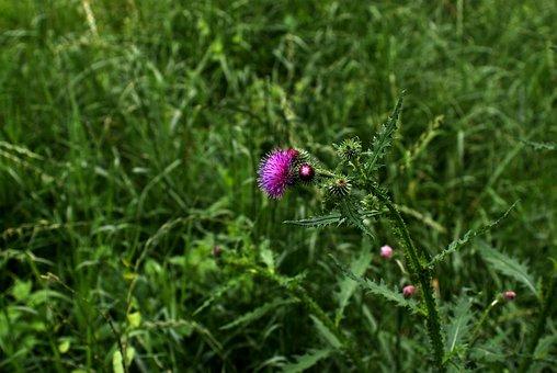 Weed, Pink, Plant, Flower, Foliage, Toxic, Strap, Glow