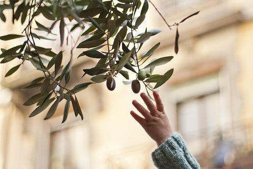 Reaching, Reaching For An Olive Branch, Olive, Branch