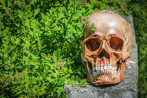 Death, Die, Skeleton, Dead, Skull And Crossbones, Skull