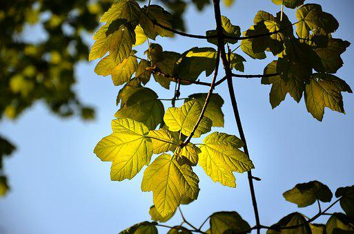 Leaf, Light, Nature, Trees, Green, Branches, Summer