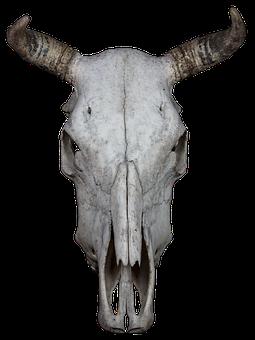 Skull, Bone, Beef, Skull And Crossbones, Weird, Death