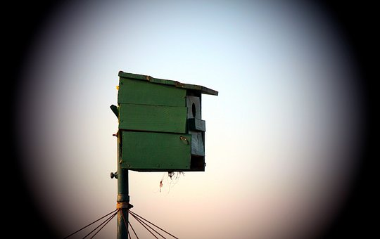 Aviary, Nesting Box, Hatchery, Nest, Bird, Einflugloch