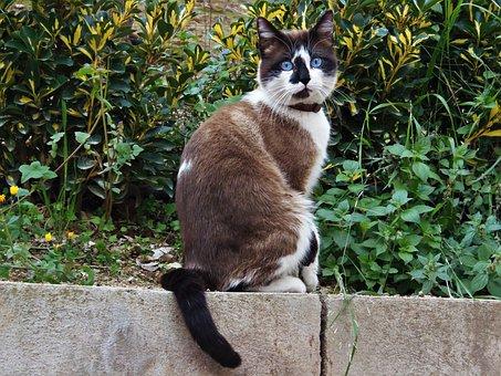 Gata, Cat, Feline Look, Blue Eyes, Animal, Pet, Feline