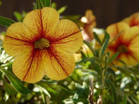 Flower, Nature, Garden, Flowers, Summer, Flowering