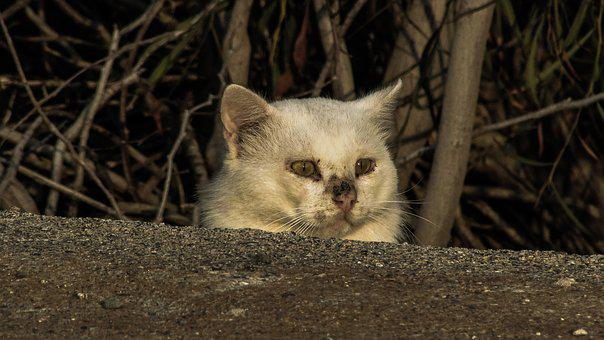 Cat, Stray, Wounded, Frightened, Hidden, Insecure