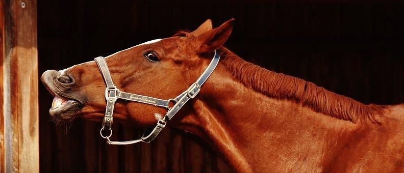Horse, Funny, Making A Face, Crazy, Cute, Reiterhof