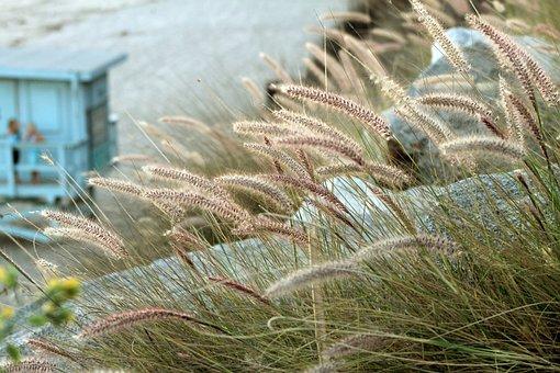 Malibu, Beach, Lifeguard Station, Grass, Grasses