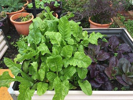 Green, Growth, Healthy, Leaf, Plant, Organic, Garden