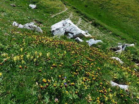 Mountainside, Meadow, Brown Dress, Flowers, Yellow