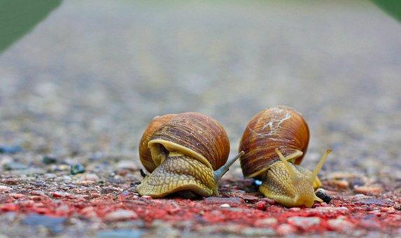 Snails, Race, Run, Road, Target, Finish Line, Sport