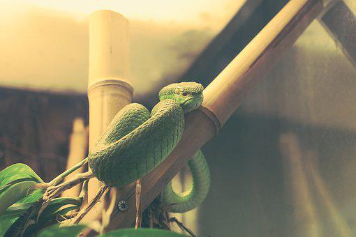 Snake, Green, Captivity, Sad, Reptile, Tree Snake