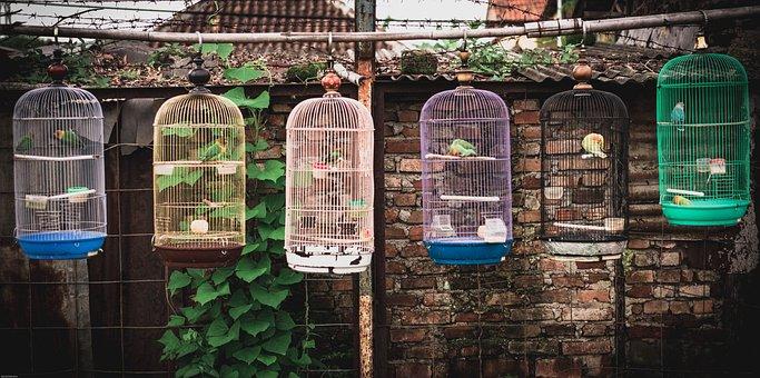 Filmlook, Bird, Vintage, Bandung, Street, Nest