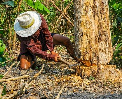 Lumberjack, Man, Axe, Exhausting, Work, Tree, Climb